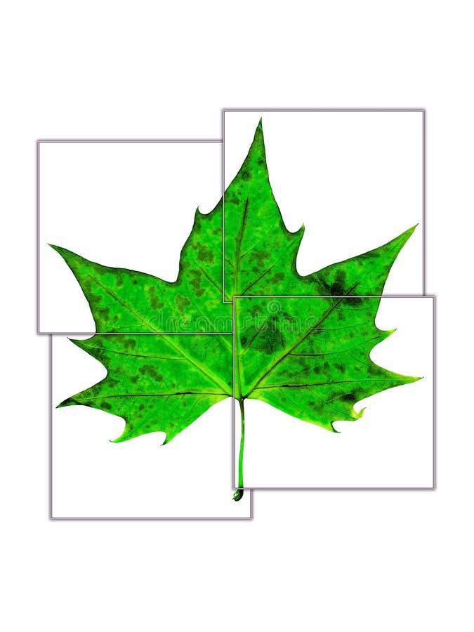delat fyra gröna leaffyrkanter arkivfoton