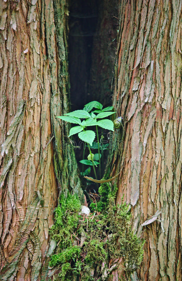 Delat träd med den gröna växten och snigeln royaltyfri foto