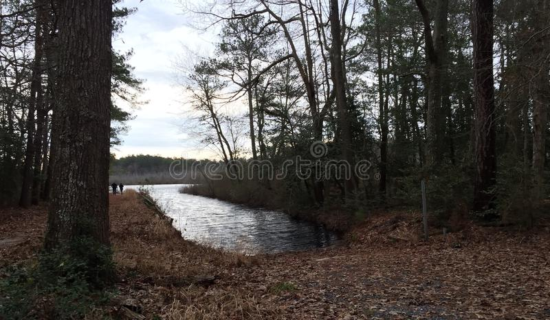 Delaware wild life stock photography