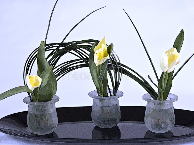 Deleicate Tulips stock photos