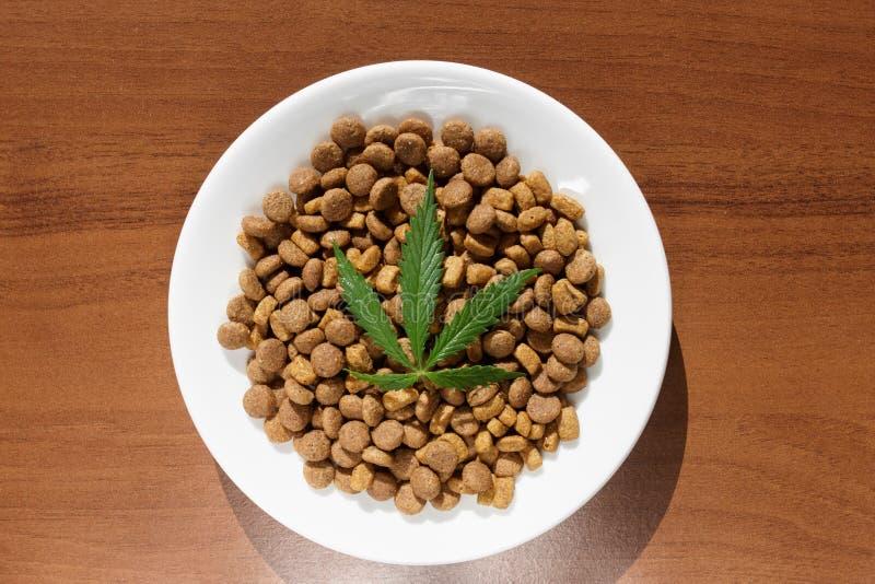 Deleites para c?es e gato nos pratos brancos com uma folha verde do fim do c?nhamo acima - de CBD e da marijuana m?dica para anim fotos de stock royalty free