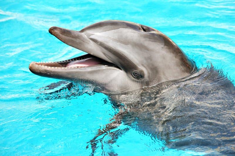 Delfín amistoso fotos de archivo