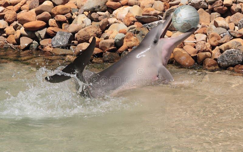 Delfín con un globo del mundo imagenes de archivo