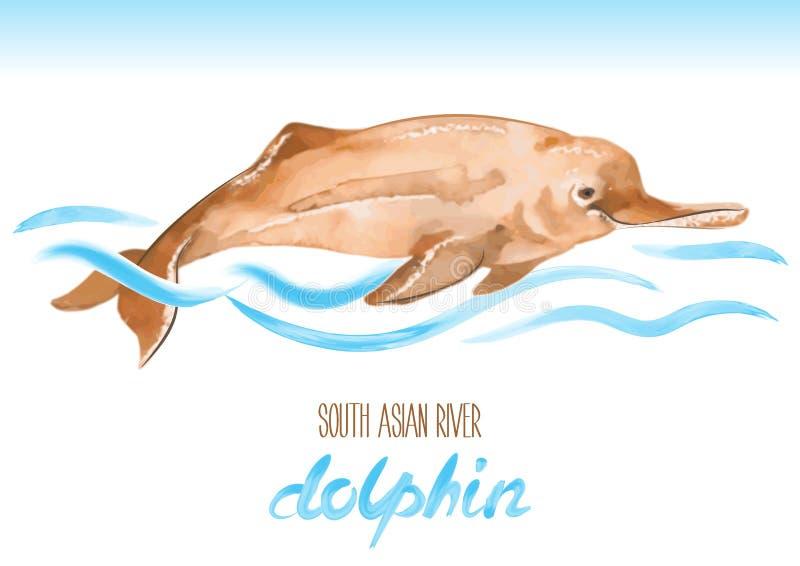 Delfín de río asiático del sur Gangetica de Platanista stock de ilustración