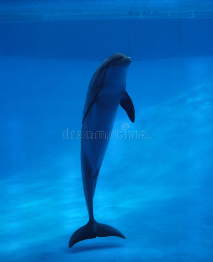 Delfín en acuario foto de archivo libre de regalías
