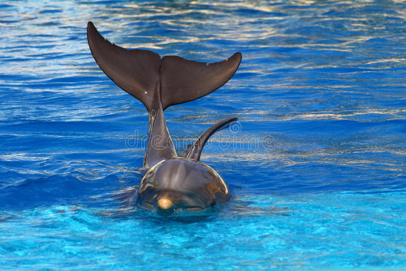 Delfín hermoso foto de archivo libre de regalías