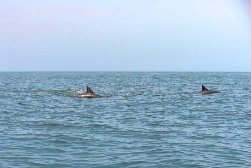 Delfín hermoso en el mar fotos de archivo