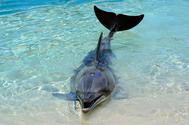 Delfín prisionero foto de archivo
