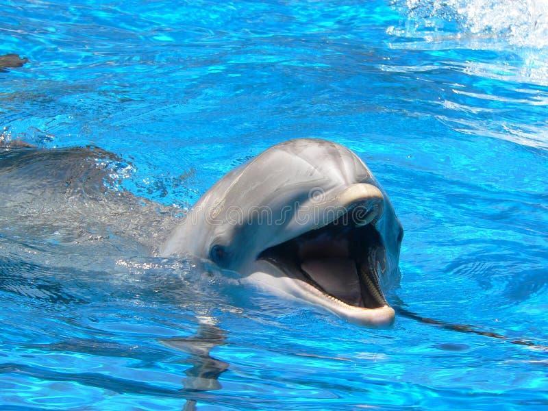 Delfín sonriente imagenes de archivo