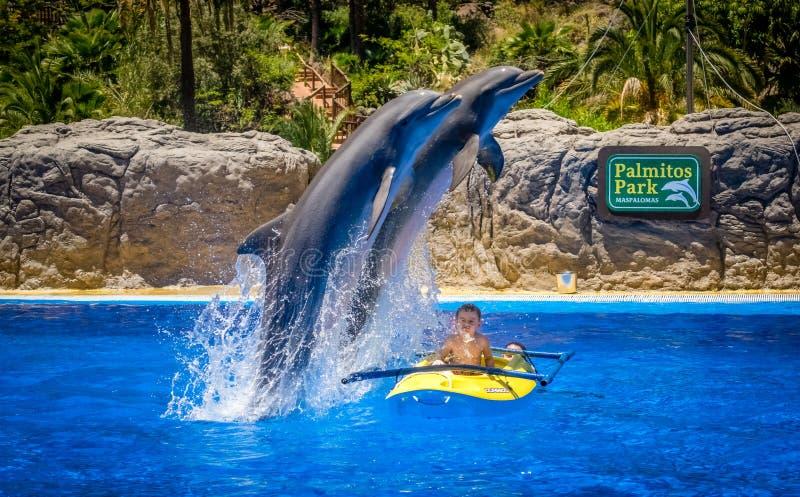Delfínes de salto imagenes de archivo
