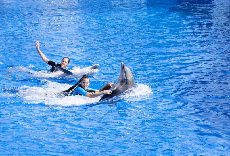 Delfínes entrenados que nadan en una piscina con la gente fotos de archivo