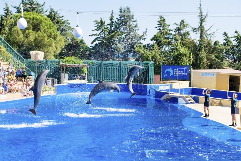 Delfínes entrenados que saltan adentro foto de archivo libre de regalías
