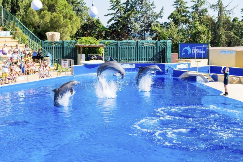 Delfínes entrenados que saltan adentro imágenes de archivo libres de regalías