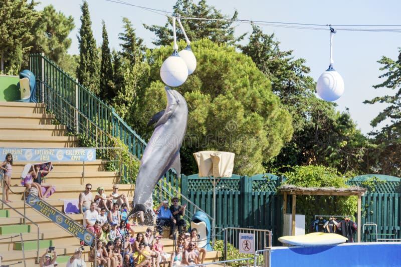Delfínes entrenados que saltan en una piscina imagen de archivo libre de regalías