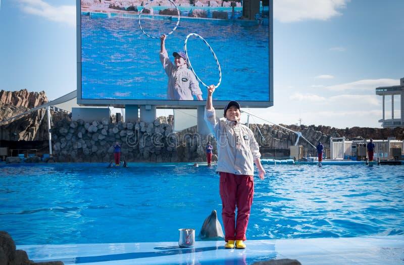Delf?nes y su instructor en el puerto de acuario p?blico de Nagoya foto de archivo