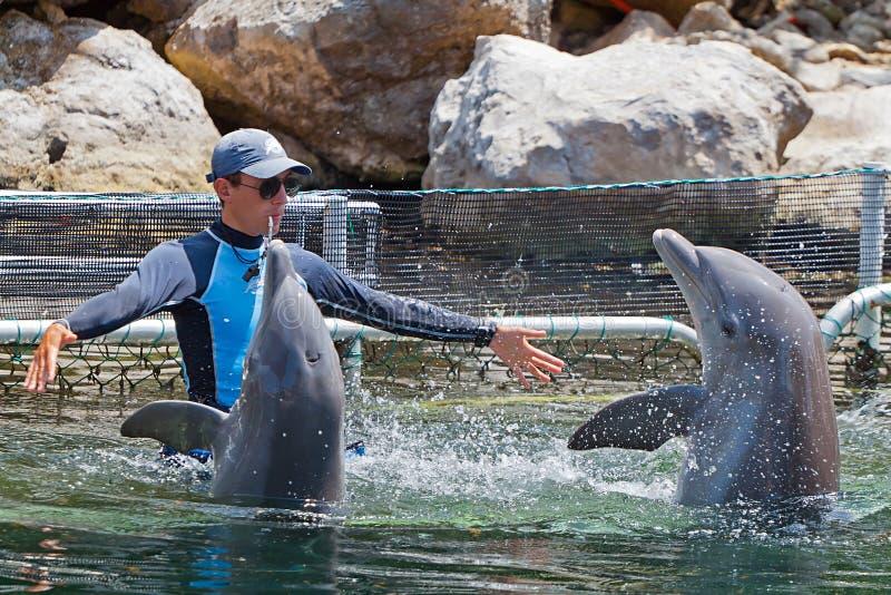 Delfinów mężczyzna parka szkolenia woda