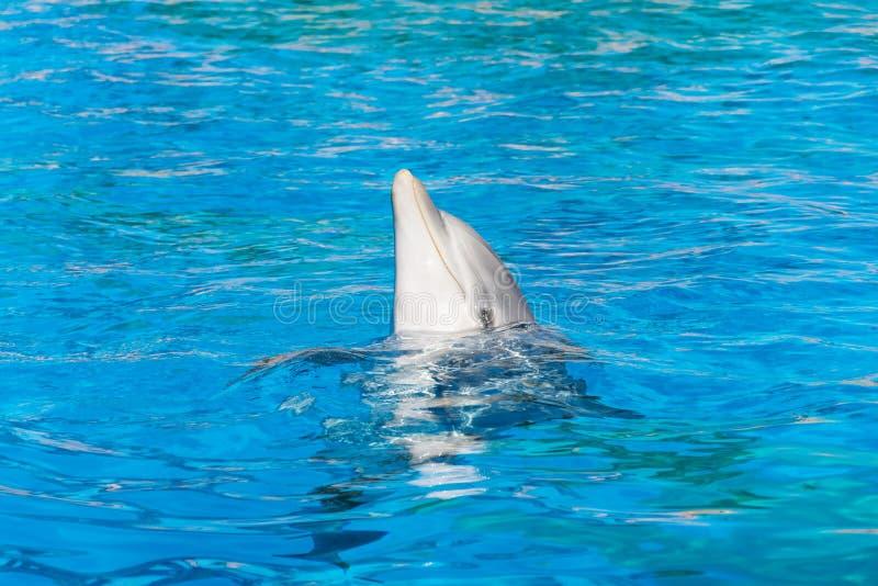 delfin fotografering för bildbyråer