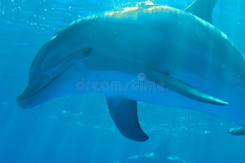 Delfin fotografía de archivo