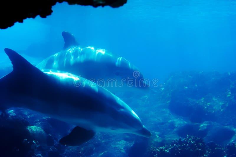 Delfin 2 zdjęcie stock