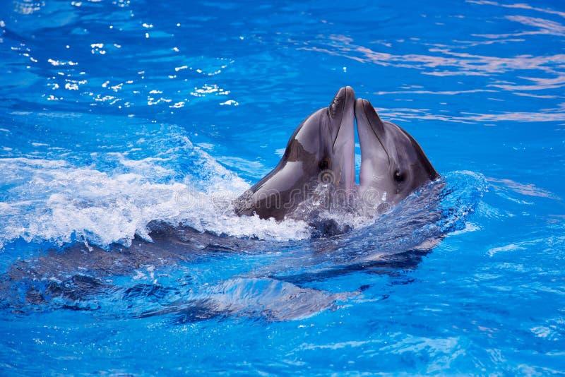 delfin royaltyfria foton
