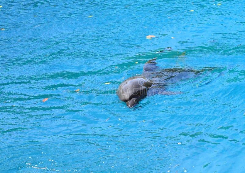 Download Delfin zdjęcie stock. Obraz złożonej z porada, jeden - 29280938
