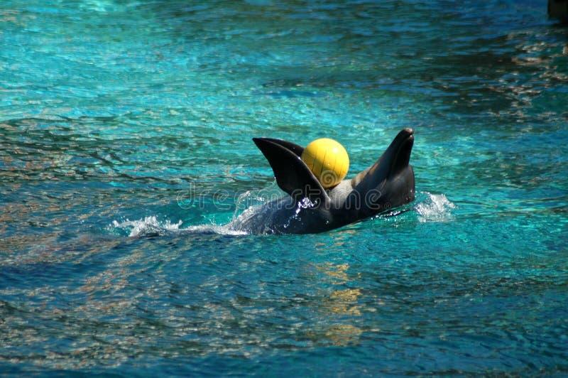 delfin zdjęcia stock