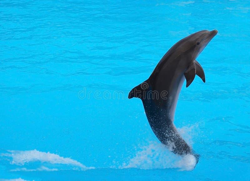 Delfin immagini stock