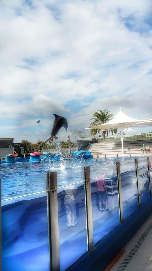 delfin obrazy stock