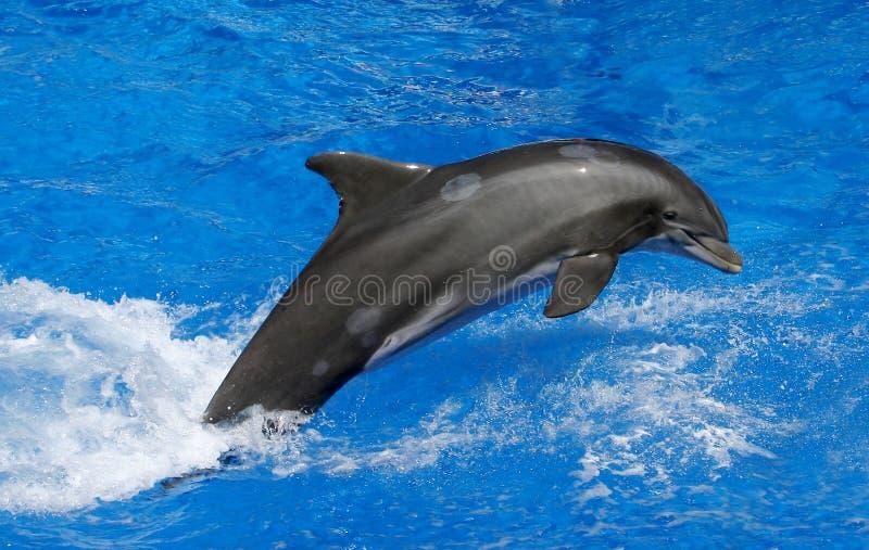delfin arkivfoton