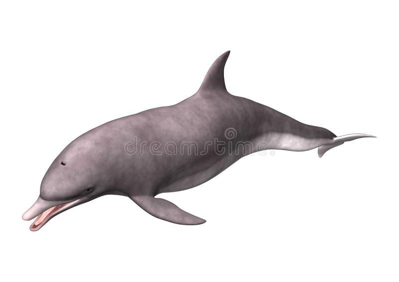 delfin för tolkning 3D på vit arkivfoto