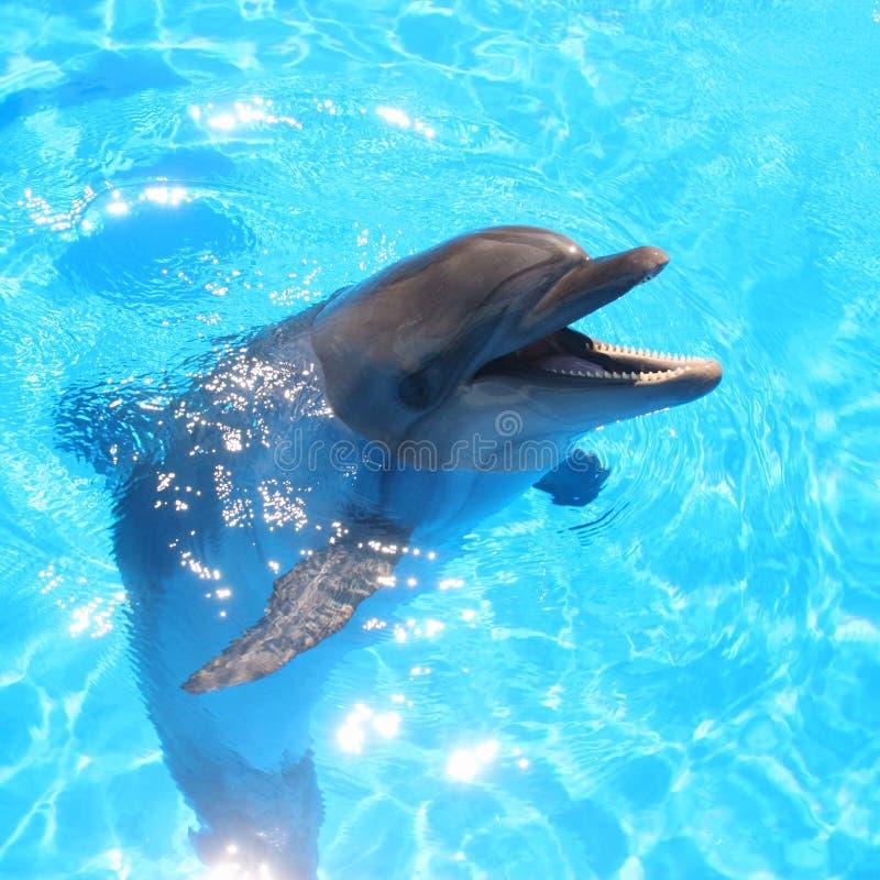 Delfin głowy obrazek - Akcyjne fotografie fotografia royalty free