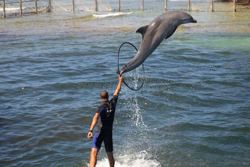 Delfin i en delfinarium i en mangrove vid havet arkivfoto