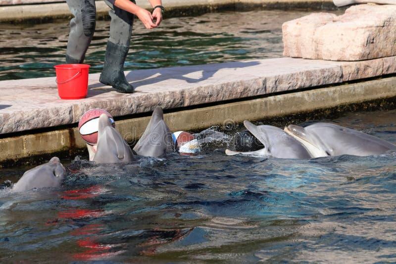 Delfin im Zoo in Deutschland in Nürnberg lizenzfreie stockbilder
