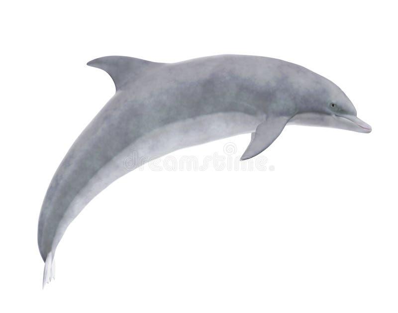 delfin odizolowywający royalty ilustracja