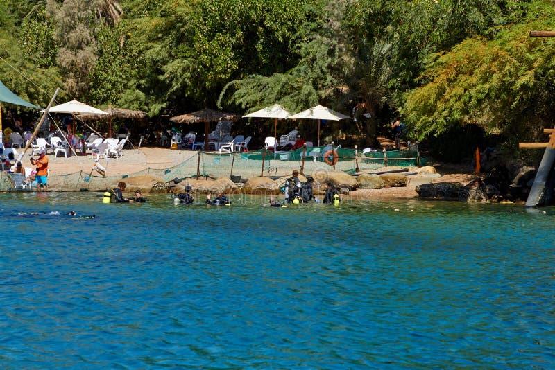 Delfin rafa na Czerwonym morzu zdjęcia royalty free