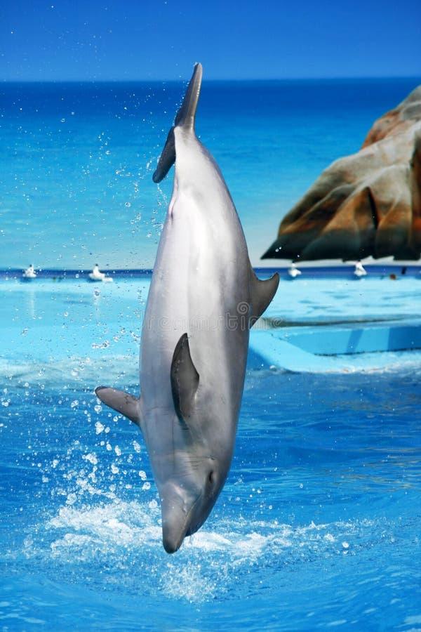 delfin skacze obrazy stock
