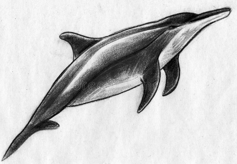 Delfin skissar stock illustrationer