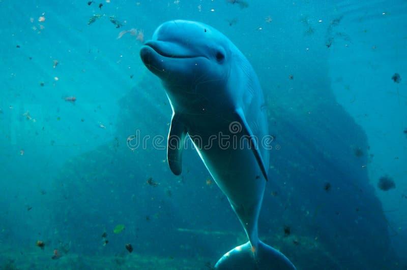 Delfin som poserar för kamera royaltyfri fotografi