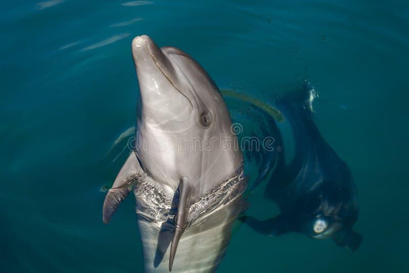 Delfin som spelar i havet arkivbild