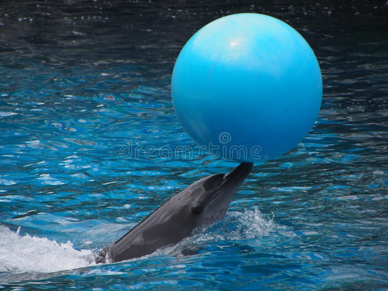 Delfin w zoo, Bangkok, Tajlandia obraz royalty free