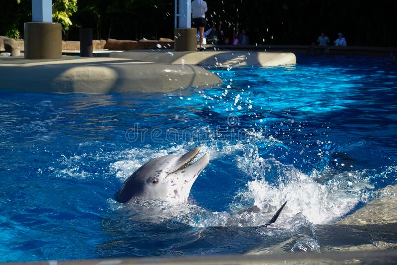 delfin woda dwa obraz royalty free