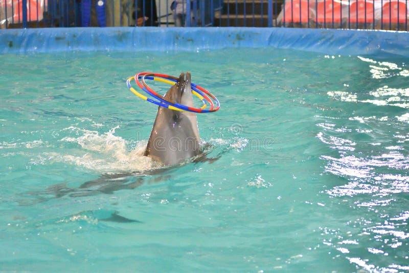 Delfin z obręczem obrazy royalty free