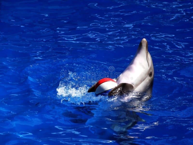 Delfin z piłką fotografia royalty free