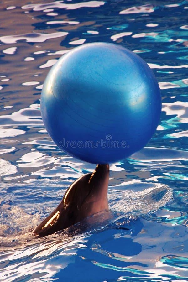 Delfin z piłką obraz royalty free