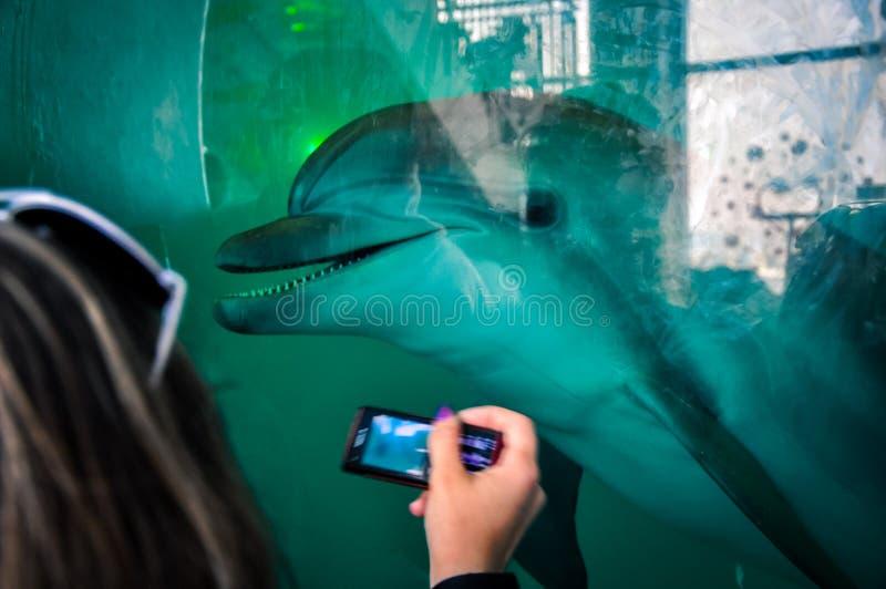 Delfinariummötefolk och delfin royaltyfri bild