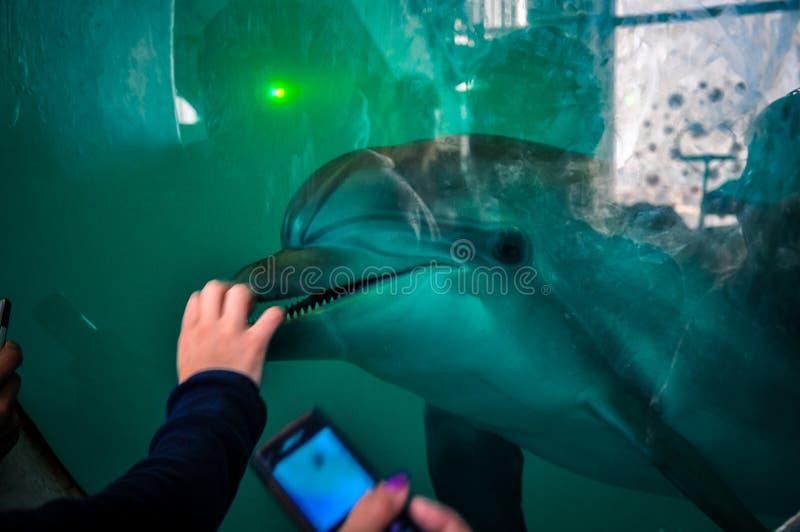 Delfinariummötefolk och delfin royaltyfria bilder