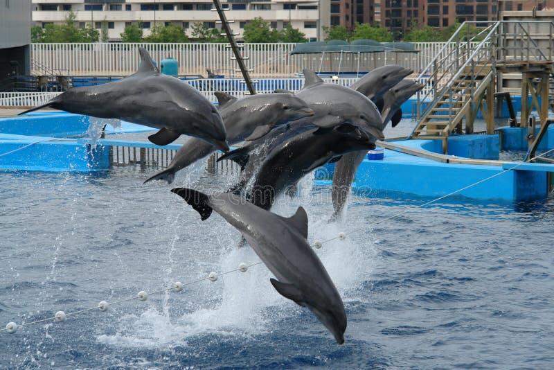 delfiner arkivbild