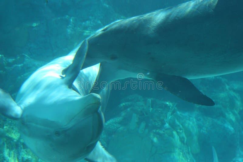Download Delfiner fotografering för bildbyråer. Bild av skämtsamt - 277961
