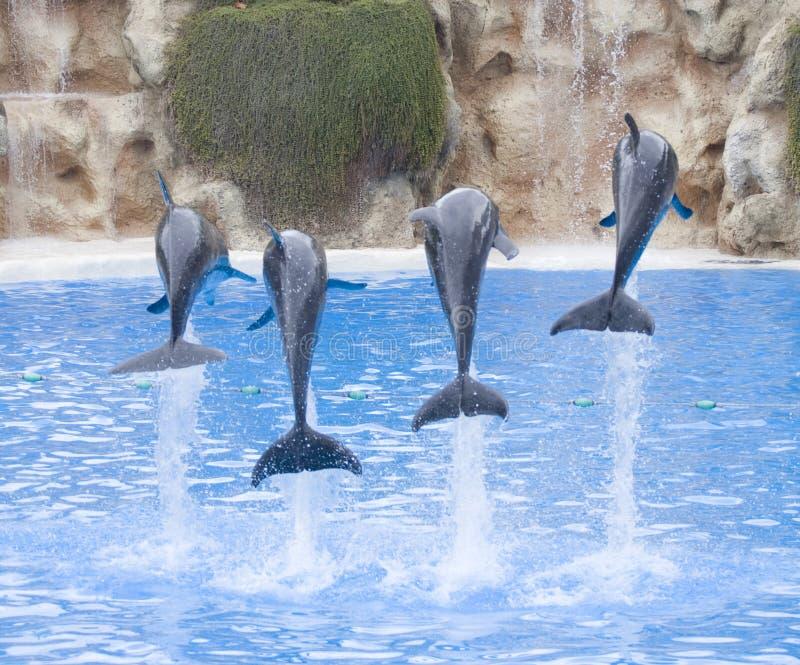 delfiner royaltyfria bilder