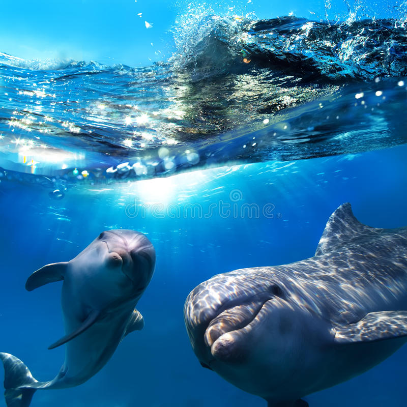 delfiner undervattens- roliga le två arkivbilder